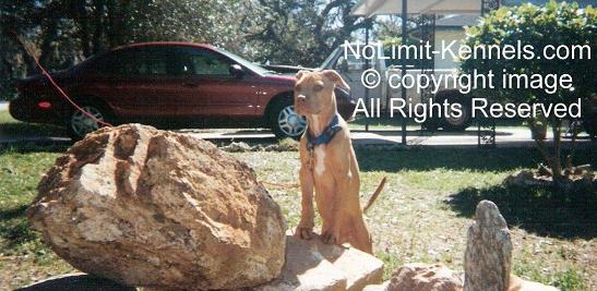 click here to enter NoLimit-Pits & NoLimit-Kennels
